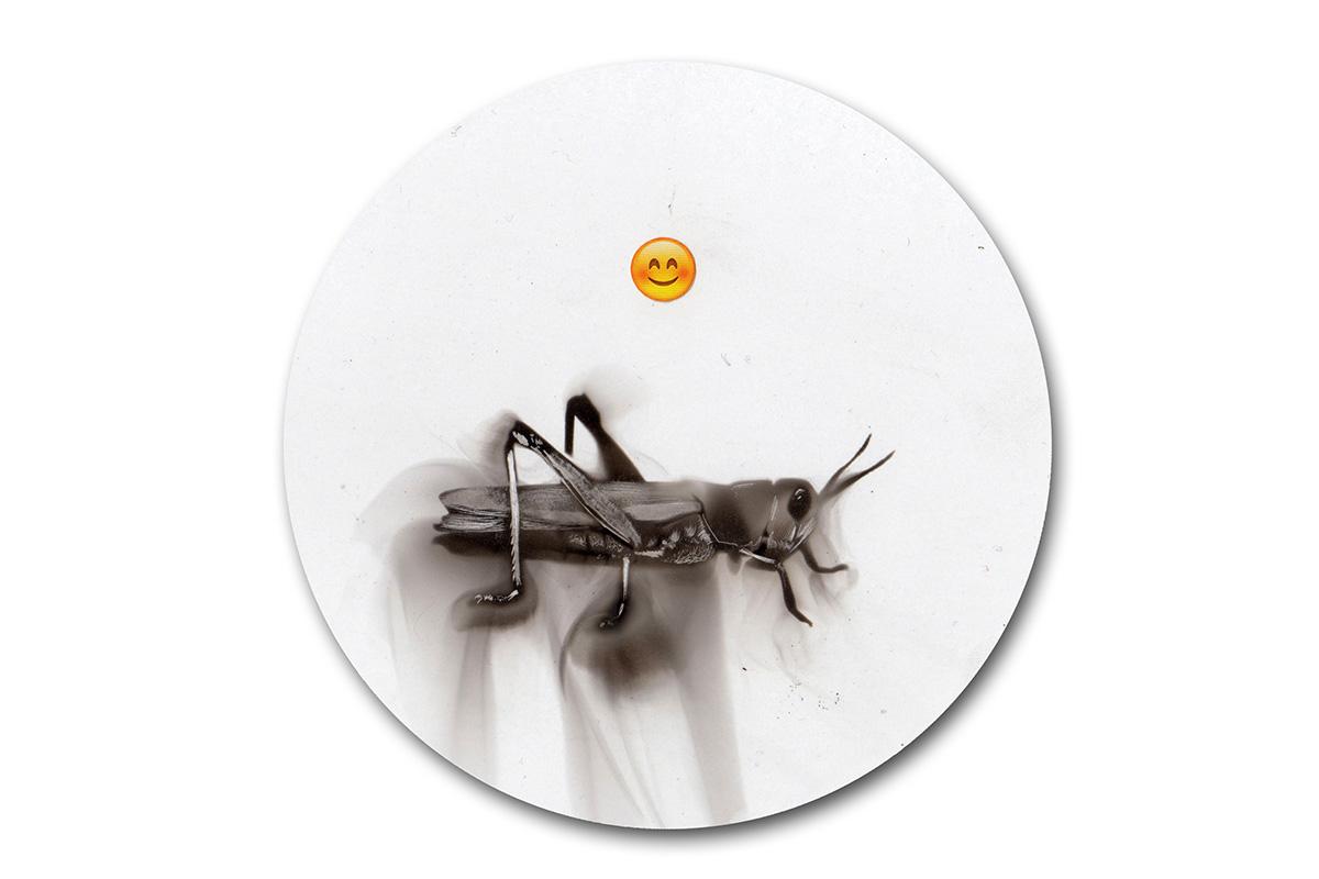 Spazuk - Grasshopper