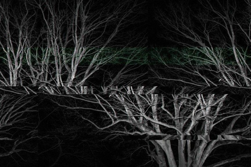 Trees, CMHHTD