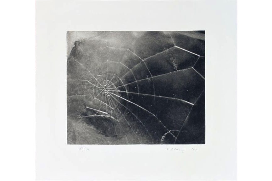 Vija Celmins - Spider Web