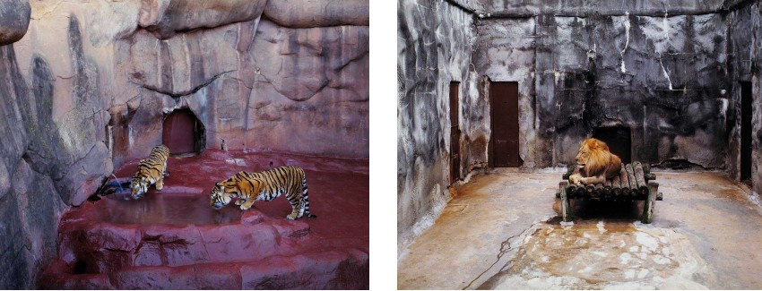 Volker Seding - Tigers, Oklahoma City (Left) / Sleeping Lion, Jacksonville, Florida (Right), photo credits Ffoto Image, print sign 1999 help