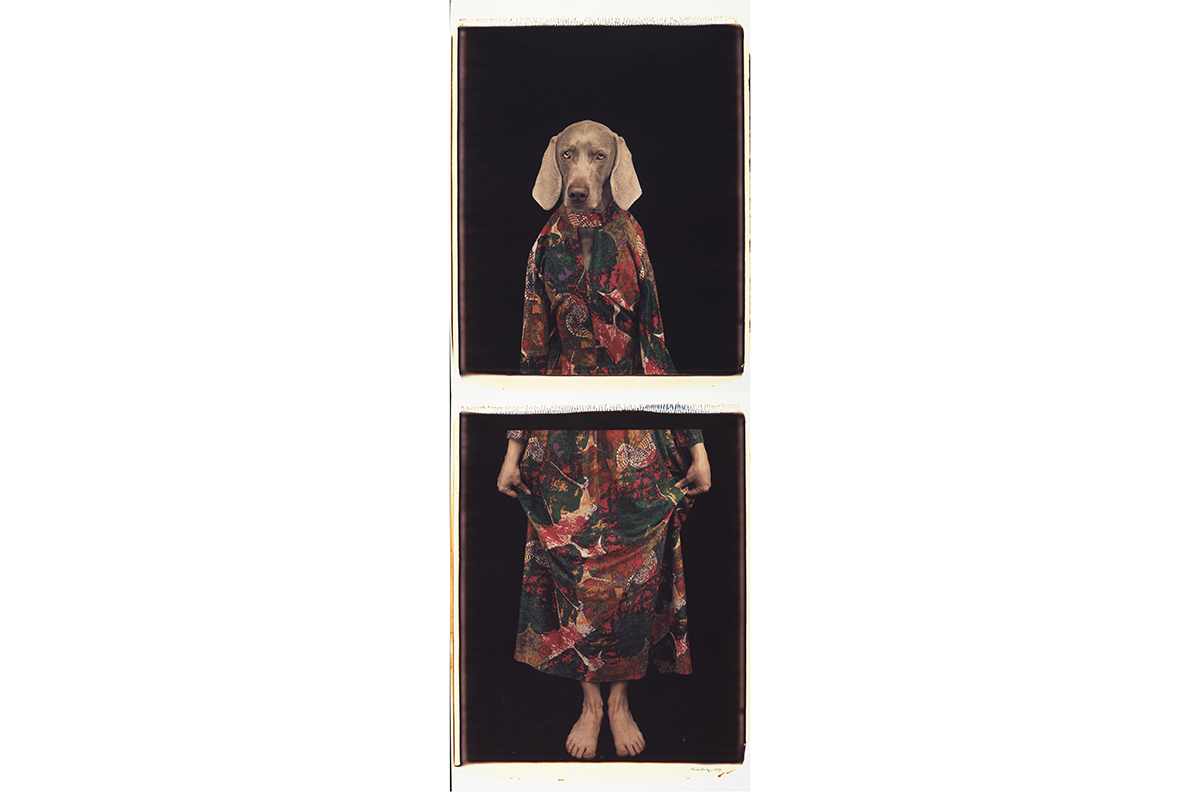 William Wegman - Dressed from Below, 1994