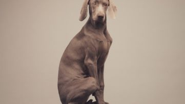 William Wegman - Left to Right, detail