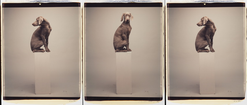 William Wegman - Left to Right