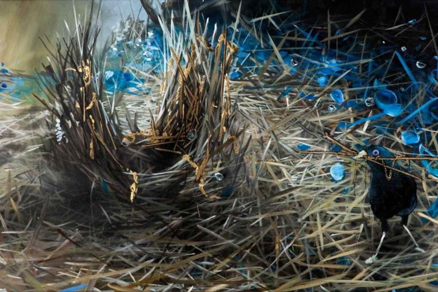 Xenz - The Satin Bower Bird street art murals birds in nature